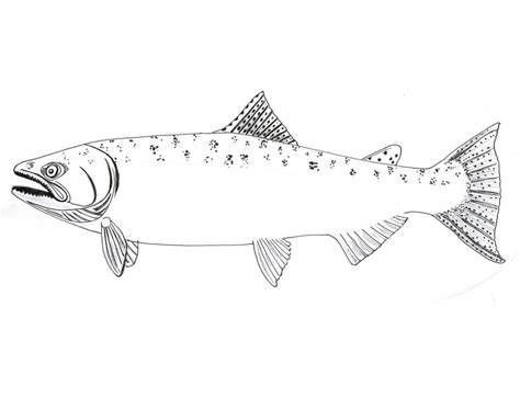 king salmon coloring page pin king salmon colouring pages on pinterest