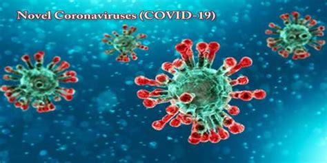 deadly virus  coronaviruses assignment point