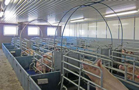 schweinestall bauen schweinest 228 lle schweinestall ferkelaufzucht schweinezucht