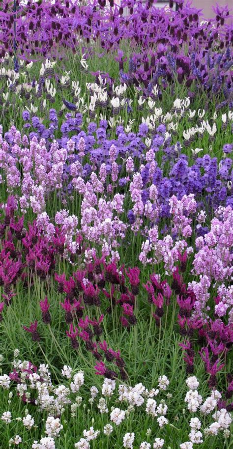 Gartenpflanzen Im Juli Pflanzen by Garten Anpflanzen Bl 252 Hende B 252 Sche Und Andere Gartenpflanzen