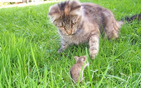 how do mice get in house how to get rid of mice in the house