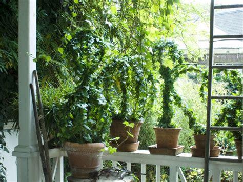 Klimplant Voor Binnen by Klimplant Binnen Gloriosa With Klimplant Binnen