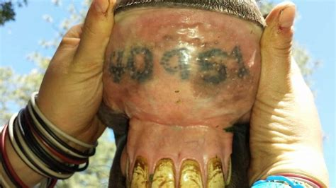 tattoo horses lips not just for identification horse tattoos warhorses
