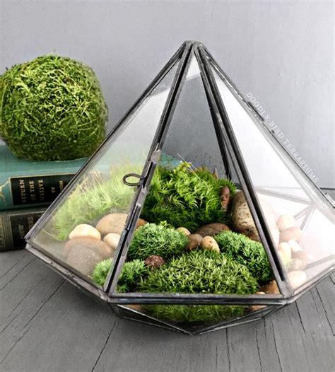 live plant office terrarium mini indoor desk garden 40 best images about mosses on pinterest gardens