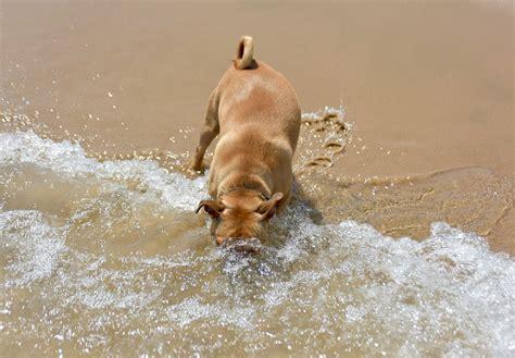 bagno ai cani spiagge per cani in toscana weplaya