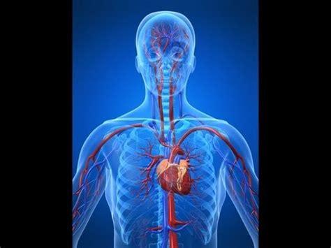 cardiovascular system  easy youtube