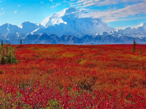 denali national park  preserve ak united states