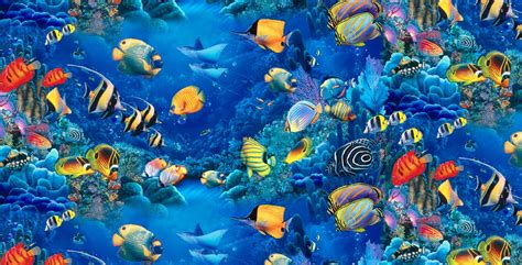wallpaper colorful fish and interactive water im 225 genes de peces