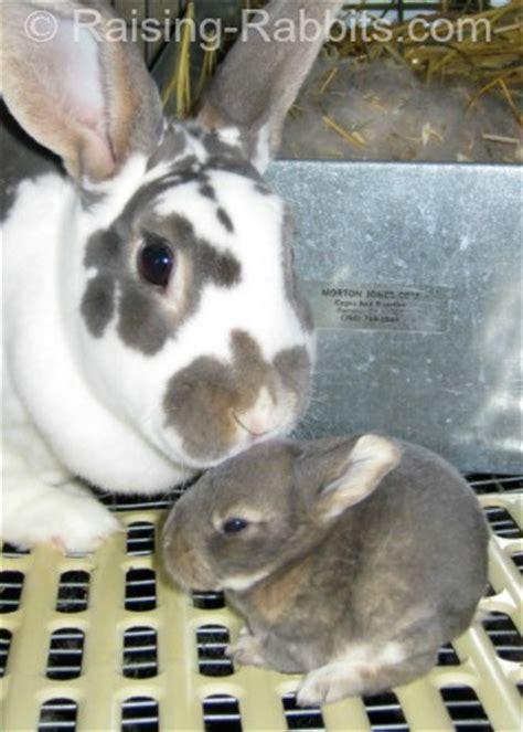 predator prey rabbit predator info   rabbits stay alive