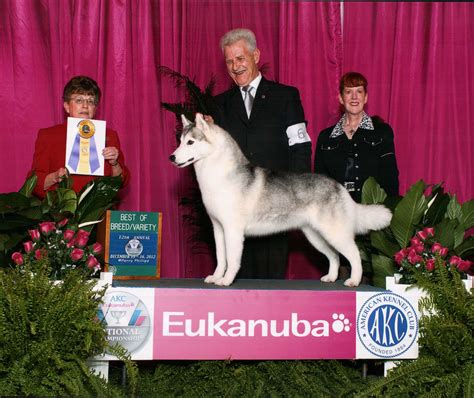 eukanuba show staffer s heading for big apple 187 the veterinary page college of veterinary