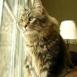le chat d ext 233 rieur plus heureux que le chat d int 233 rieur