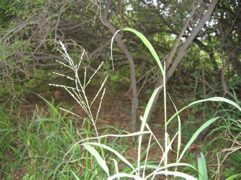 South Grass by Melville Koppies Flora