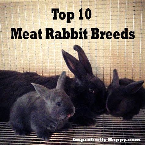 backyard meat rabbits raising meat rabbits your backyard 28 images raising meat rabbits in your backyard