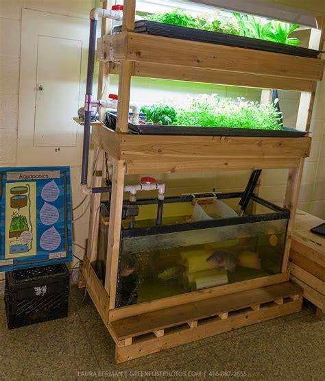 Indoor Ap System Mini Aquaponics Pinterest Fish Tank Vegetable Garden