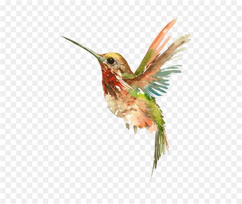 watercolor tattoos hummingbird hummingbird watercolor painting flying bird png