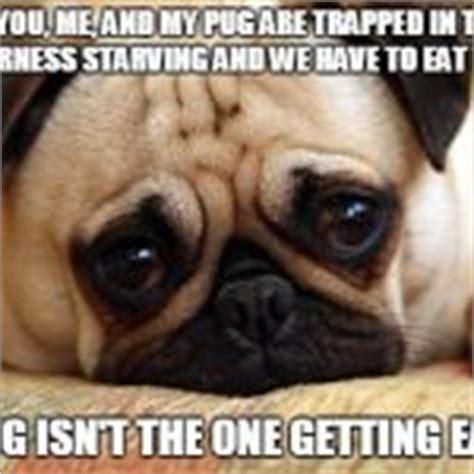 Sad Pug Meme - sad pug meme generator imgflip