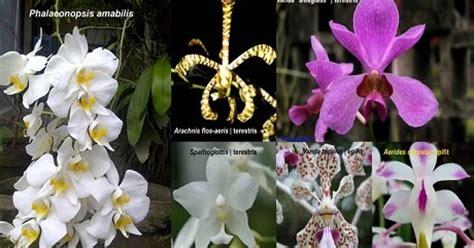 Bunga Anggrek Cattleya Artificial Tanaman Plastik Hias Dekorasi anggrek tanaman hias multi fungsi tanaman bunga anggrek