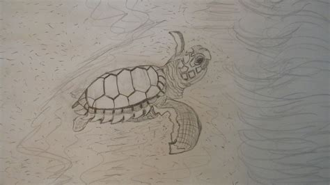 baby sea turtle sketch