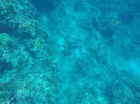 Green Turtles Big Island Time