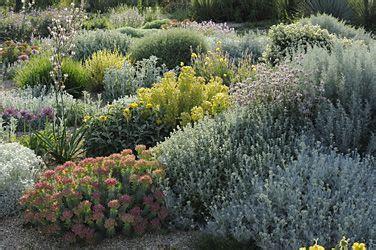 Plante Pour Jardin Sec by P 233 Pini 232 Re Filippi Plantes Pour Jardin Sec Jardin Mer Du
