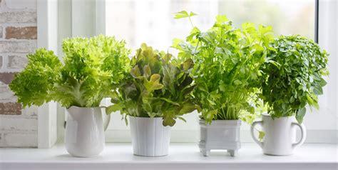 indoor herb garden ideas  kitchen herb planters