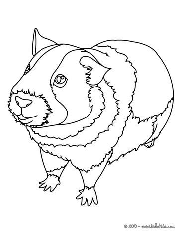 Guinea Pig Picture Coloring Pages Hellokids Com Guinea Pig Colouring Pages