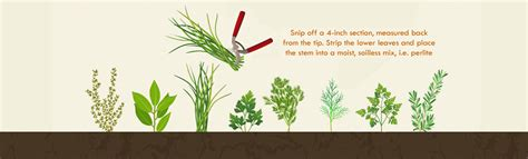 herb grower s cheat sheet the herb grower s cheat sheet infographic