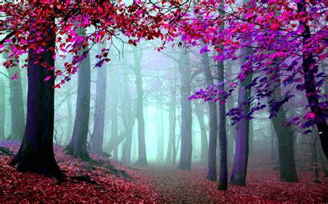 imagenes artisticas hd foto art 237 stica bosques hd imagenswiki com