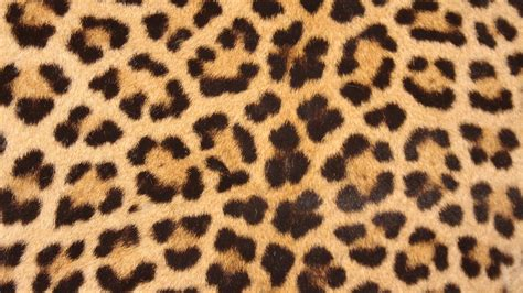 s leopard free photo leopard skin spots design free image on