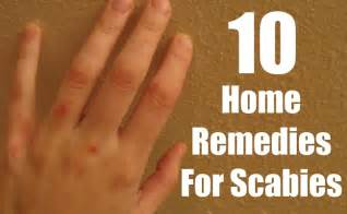 home remedy for scabies 10 must follow home remedies for scabies find home