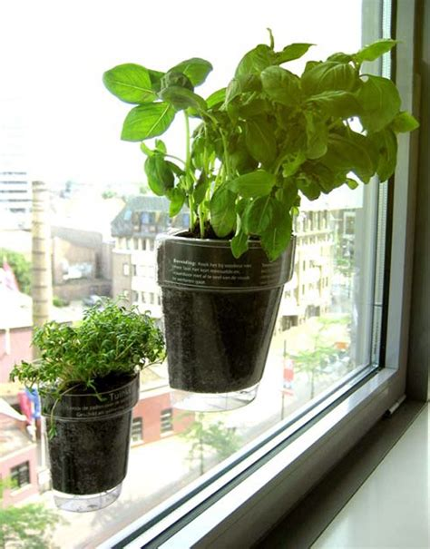 modern systems    herb garden thrive  small spaces