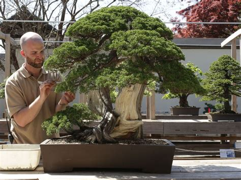 libro bonsai masterclass all you meet the 26 year old aspiring bonsai master of washington dc abc news
