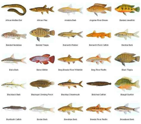 types of aquarium fish 39 best images about what is your favorite animal on