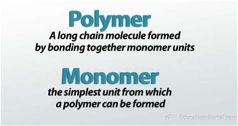 carbohydrates name of monomer name of monomers and polymers of proteins