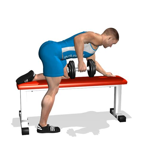 dumbbell bench rows evolutionfit one arm dumbbell row on flat bench