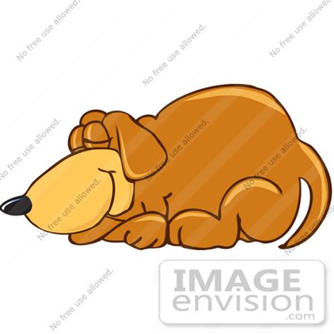 why does my dog sleep under the bed dog sleeping curled up dog breeds picture