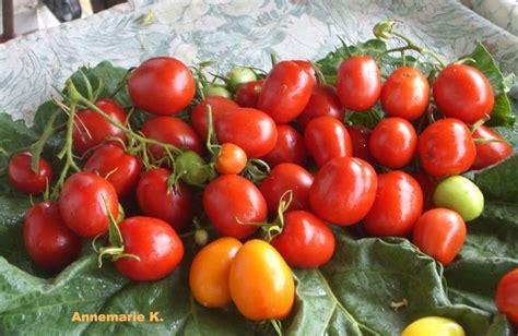 Tomate De Berao 3853 by Tomate De Berao Tomate De Berao G Rtnerei Apfeltraum