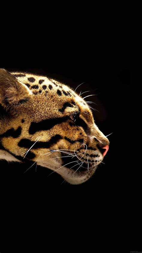 mb wallpaper wild cat  animal papersco