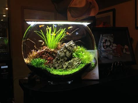 betta aquascape 25 best ideas about nano aquarium on pinterest betta