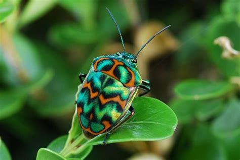 colorful bugs colorful bug bugs crawlies spiders slimeys