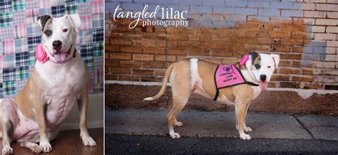 rescue dogs az american bulldog sedona wedding photography flagstaff photographer pets family