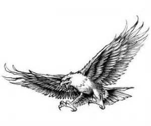 black and grey hawk tattoo 13 latest hawk tattoo designs and ideas