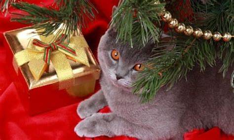 9 christmas gift ideas for cats