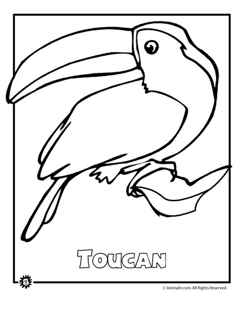coloring pages of birds in the rainforest endangered rainforest touca animal jr
