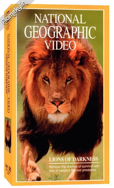 lion film national geographic national geographic lions of darkness 1997 avaxhome