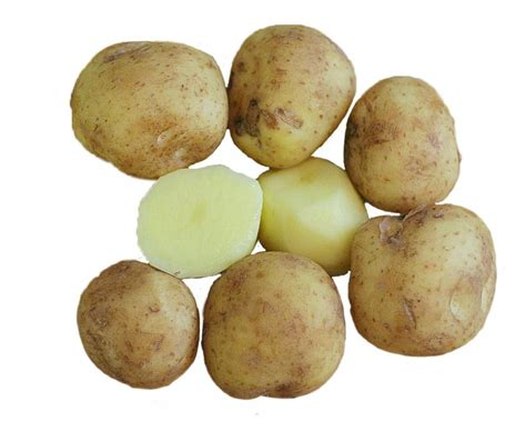 Potato Wiki by Common Myths Cracked About Your Fruits And Vegetables