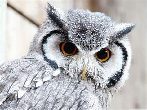 owl wallpaper for macbook best 25 cute owls wallpaper ideas on pinterest owl