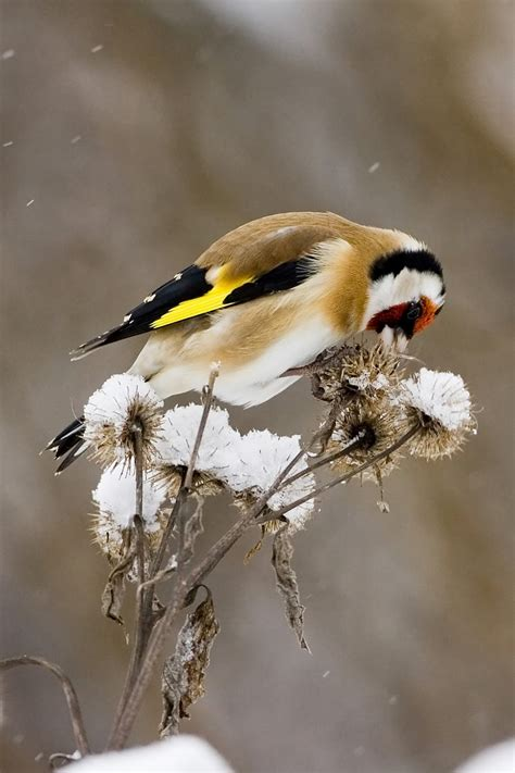 livelifelike com march 11 live life like a goldfinch