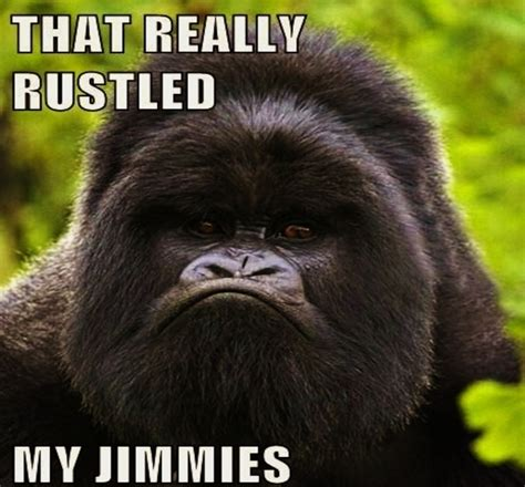 Gorilla Meme - jimmyfungus com funguspiece theater celebrates the 10th
