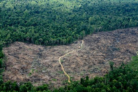 kerusakan hutan  jambi hilangnya hutan hujan tropis
